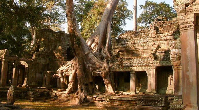 Ta Prohm Jungle Temple bij Angkor Wat
