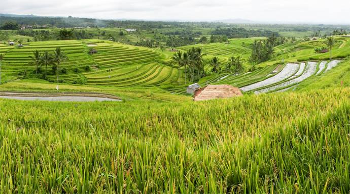 Jatiluwih rijstterras Bali