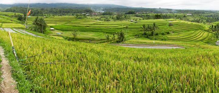 Scootertocht op Bali naar de Jatiluwih rijstvelden