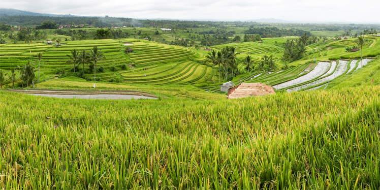 Jatiluwih rijstvelden op Bali