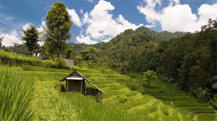 Rijstvelden Sidemen op Bali