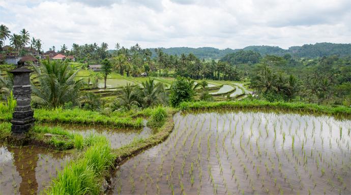 Uitzicht op rijstvelden en rijstterrassen bij Sidemen