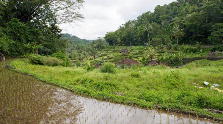 Zwembad bij Terras Bali Sidemen Bungalows and Spa