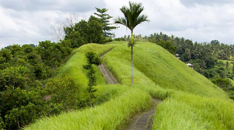 Wandeltocht Campuhan Ridge Walk Ubud