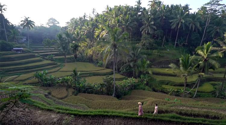 Tegallang rijstterras bij Ubud op Bali