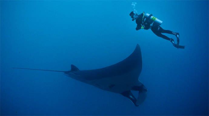 Duiken en snorkelen met Manta Rays bij Nusa Lembongan en Nusa Penida