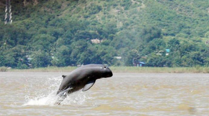 Irrawaddy dolfijnen spotten bij Si Phan Don