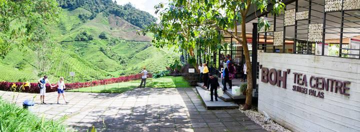 Boh Tea Estate Cameron Highlands backpacken Maleisië