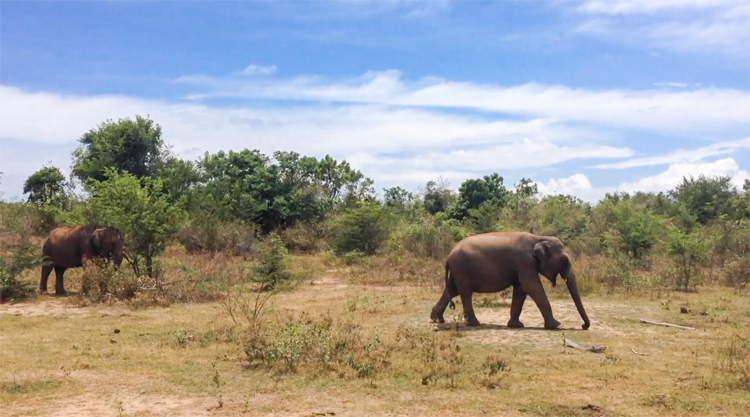 Safari Udu Walawe backpacken Sri Lanka