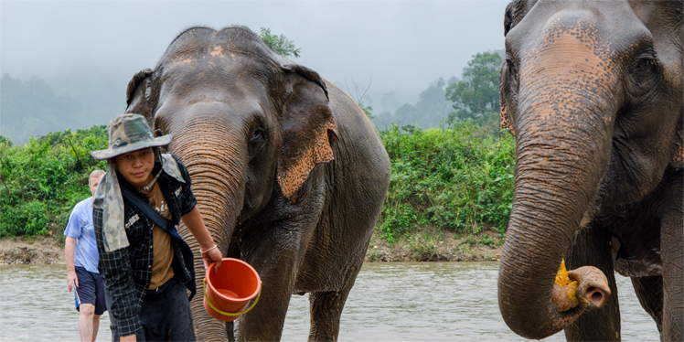 Olifanten wassen in Elephant Nature Park bij Chiang Mai